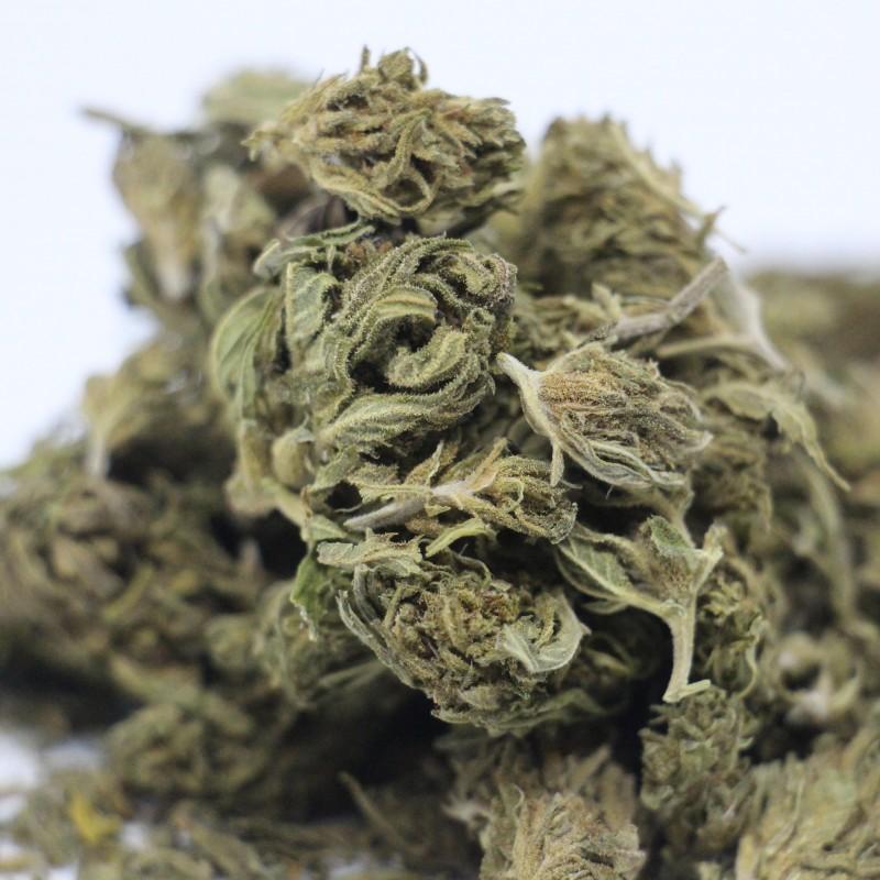 Marihuana CBD+